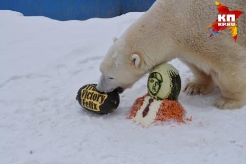 Знаменитого российского медведя, предсказавшего победу Трампа, наградили тортом