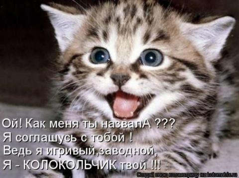 Котодром - 28 от Михалыча