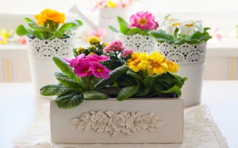 10 лучших красивоцветущих комнатных растений
