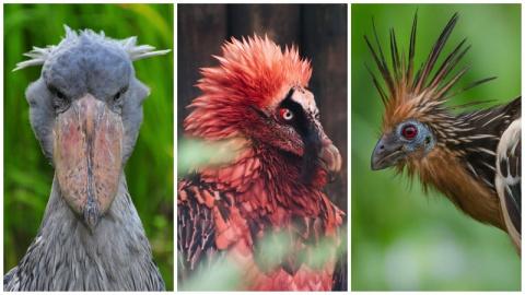 А вы встречали таких странных птичек
