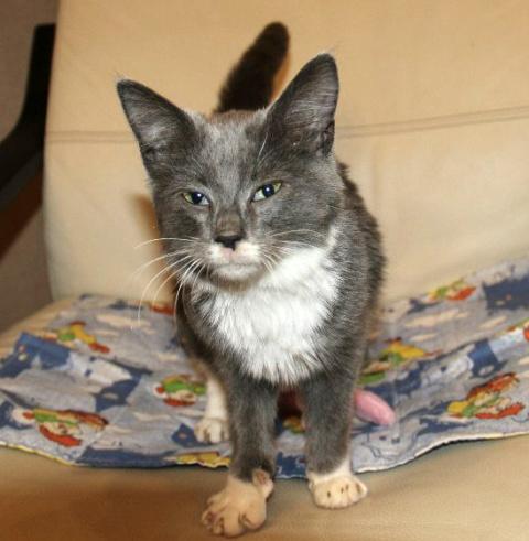 В помойке был обнаружен голодный кричащий котенок