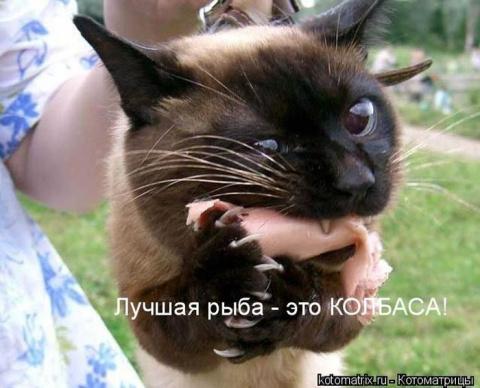 Уморительные котоматрицы для…