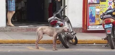 Этот щенок медленно умирал на улице
