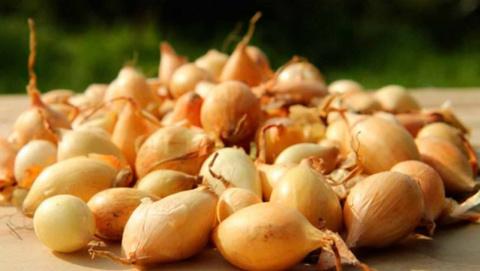 Как на зиму садить лук севок