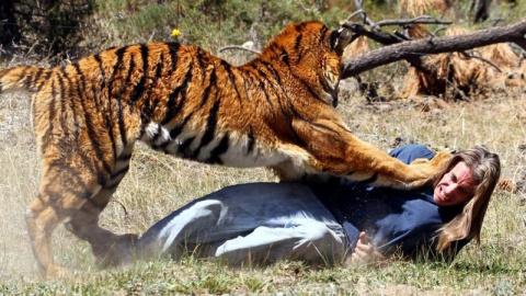 Тупой и еще тупее: 15 идиотов, которые перелезли через забор к хищникам в зоопарке
