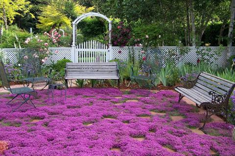 Почвопокровные растения – вашей дачи возрождение