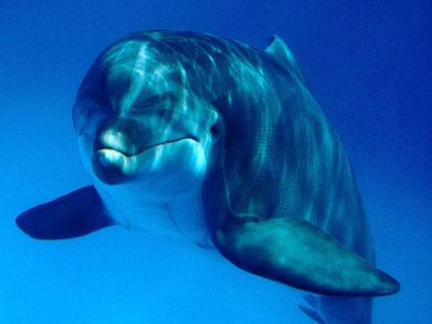Запутавшийся в сети дельфин попросил помощи у дайвера