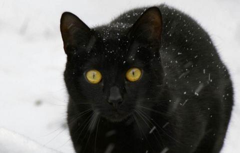 Как я спасал кота, которого соседка чуть джипом не переехала