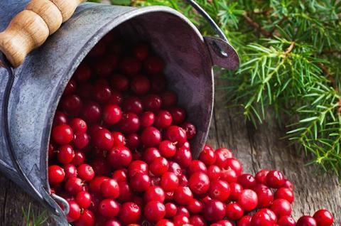 Болотный виноград. Почему клюква считается самой полезной российской ягодой