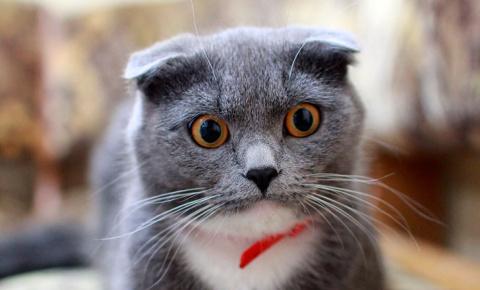 Умный кот сам объяснил хозяи…