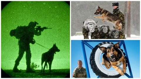 Служебные собаки: четвероног…