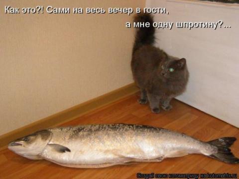 Новая котоматрица))
