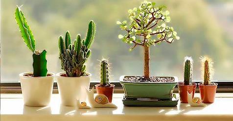 Какие растения защитят дом от бедности и неприятностей