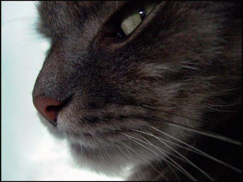 Оборзевший кот: инструкция п…