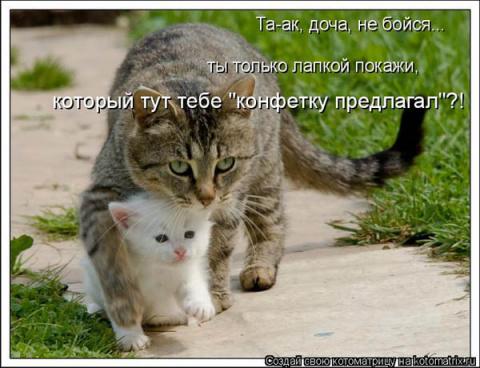 кошачьи - Страница 2 Big