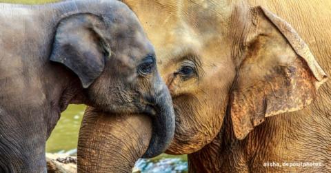 Бабушка для слоненка