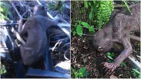 Испуганные жители деревни избили «внеземное» существо!