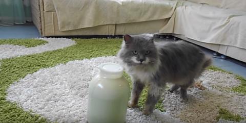 Смекалке этого кота позавидуют многие. Он — настоящий гений!