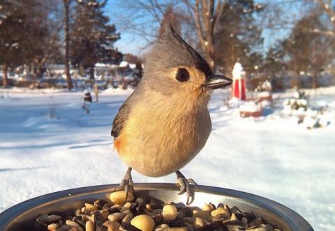 Кормить или не кормить: к чему приводит подкормка птиц