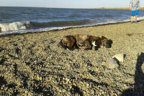 Непростая история пса Верног…