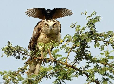 Размеры врага не имеют значения, если защищаешь свое гнездо