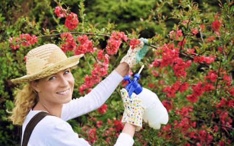 Это простое безопасное средство избавит ваш сад от многих проблем!
