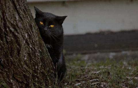 Правда ли, что коты и кошки видят призраков