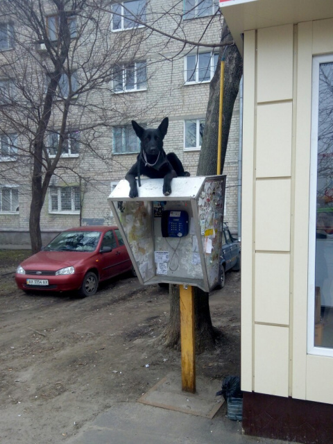 Российская действительность и собаки