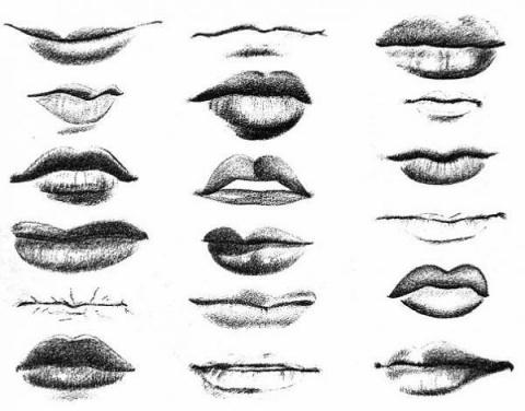 Что общего межу формой губ и…