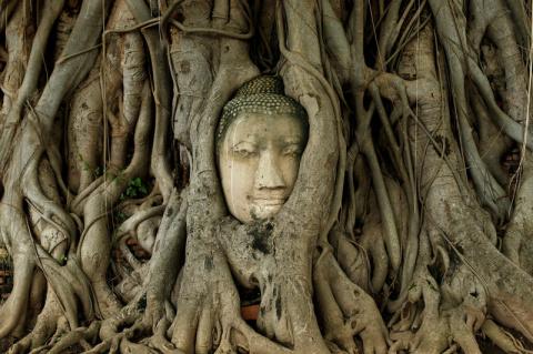 Из жизни деревьев