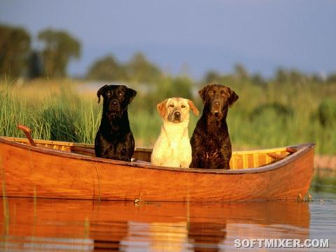 Какой национальности ваша собака?