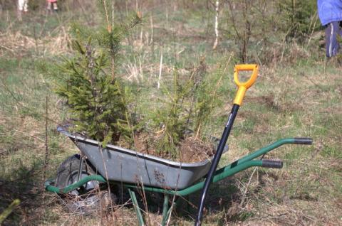 О массовых посадках леса, произведённых в окрестности деревни Ковчег на местах сплошных рубок.
