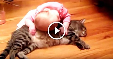 Огромный кот и его крохотная…