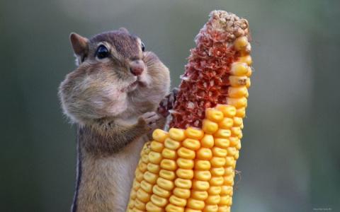 Украине грозит «кукурузный» штраф в $1.5 млрд