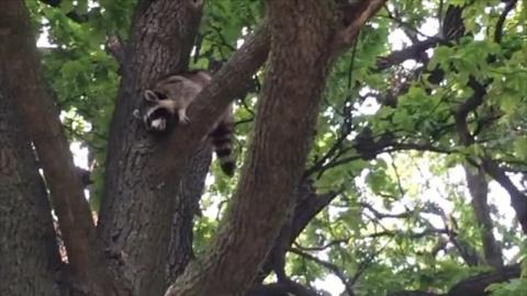 Гулявший по деревьям Тавриче…
