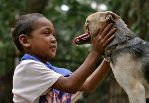 Бесстрашная собака с половиной мордочки победила рак