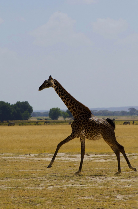 Сафари в Кении. Путешествие века!