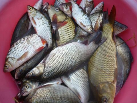 №038. Совсем коротко о рыбалке.