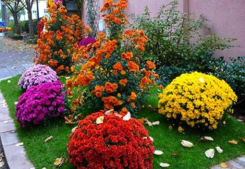 Низкорослые цветы также долж…