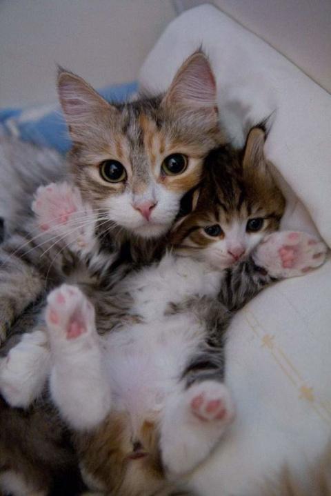 Счастливые мамочки