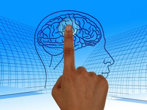 «Мозг — интерфейс между двумя мирами»
