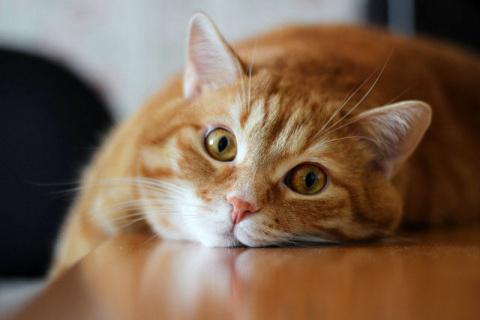 Как лечить лишай у кошек в домашних условиях. Животные, о которых мир узнал совсем недавно