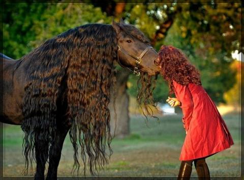 Красивый конь Фридрих Великий
