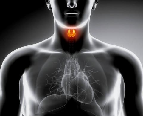 Щит для щитовидки. Нарушения функций щитовидной железы лечим травами