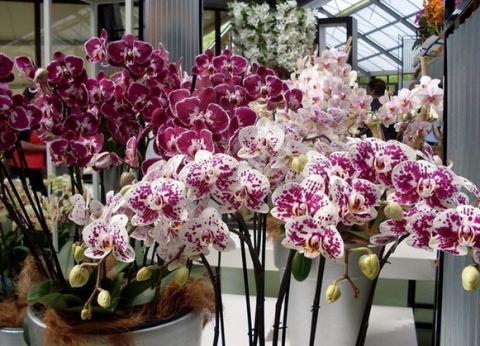 Секреты рассадки орхидей: ка…