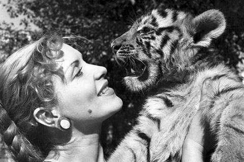 Маргарита Назарова : Первая женщина вошедшая в клетку с тиграми