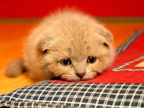 Как кошки чувствуют скорую с…