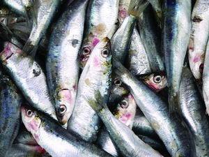 1047. Определить свежесть рыбы