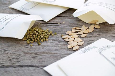 От контрастного душа до питательных ванн. Как подготовить семена к посадке?