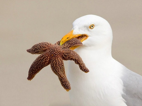 Птицы и их добыча